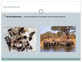 Animals - Social Relationships