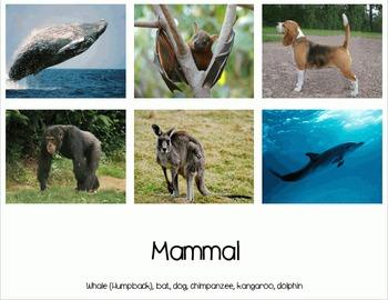 Animals Sort - Bird, Fish, Insect, Mammal, Reptile