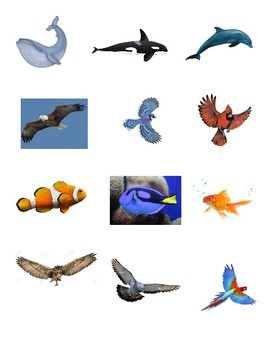 Animals Sort (air or water)