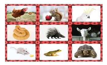 Animals Spanish Legal Size Photo Card Game