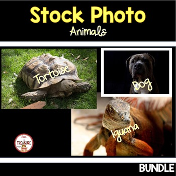 Animals Stock Photo BUNDLE