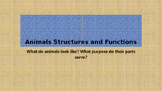 Animals Structures and Functions Powerpoint