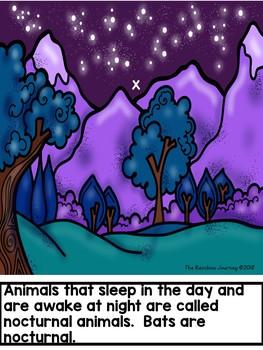 Animals That Are Awake at Night