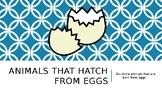 Animals That Hatch