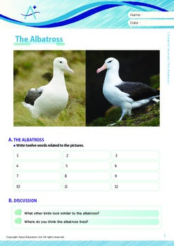 Animals - The Albatross - Grade 9