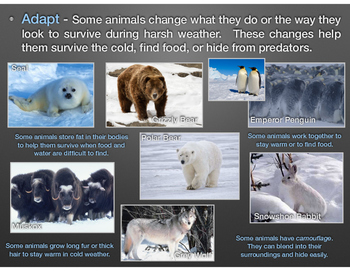 Animals & Their Habitats, PDF version of Keynote Presentation, Part One