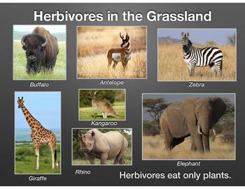 Animals & Their Habitats, PDF version of Keynote Presentation, Part Two