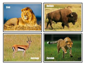 Animals & Their Habitats, Picture Files