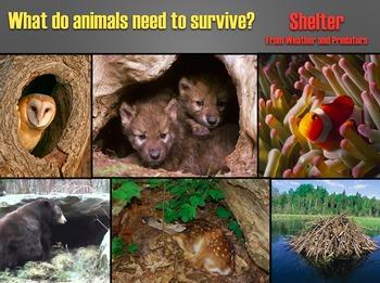Animals & Their Habitats, Powerpoint Presentation, Part One