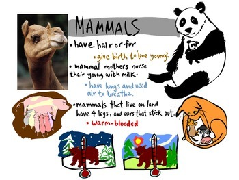 Animals Unit