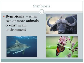 Animals Unit; Animal Behaviors and Types