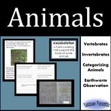 Animals:  Vertebrates and Invertebrates