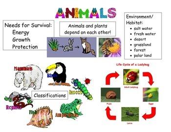 Animals Vocabulary Poster