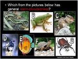 Animals and Temperature Lesson