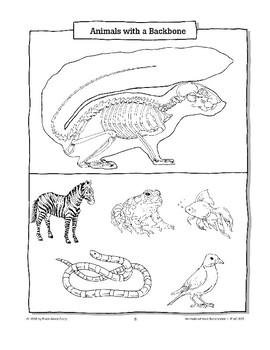 Animals Without Backbones Are Called Invertebrates