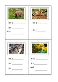 Animals and Adjectives Project