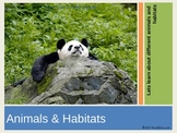 Animals and Animal Habitats   PPT