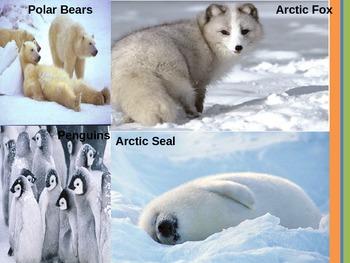 Animals and Animal Habitats   PPT