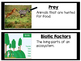 Animals and Ecosystems Vocabulary Cards 4.L.1 (Black border)