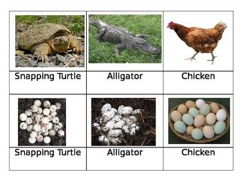 Oviparous Animals and Eggs Matchup Cards