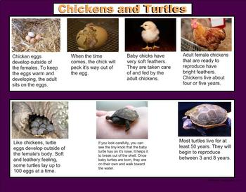 Animals and How They Grow - A Third Grade PowerPoint Introduction