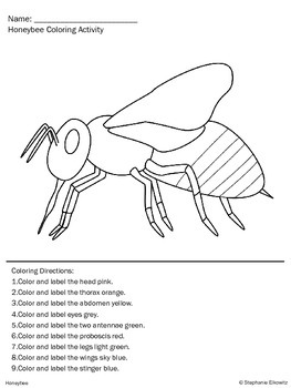 Honeybee Life Cycle Unit