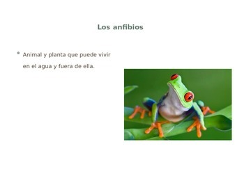 Animals and Living Things Vocabulary (In Spanish)/ Animales y Seres Vivos