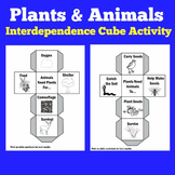 Plants and Animals Needs | Activity