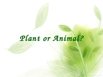 Animals and Plants PowerPoint