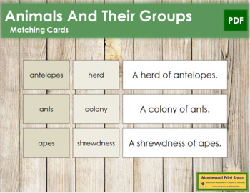 Animals and Their Groups