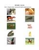 Animals and Their Offspring/Animales y Sus Crias EXAM (English y Español)