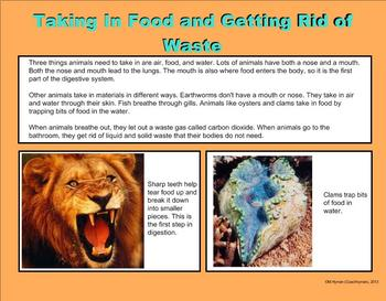 Animals and Their Parts - A Third Grade PowerPoint Introduction