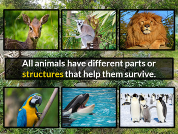 Animals and Parts PowerPoint with Quiz &Tech Activities NO PREP