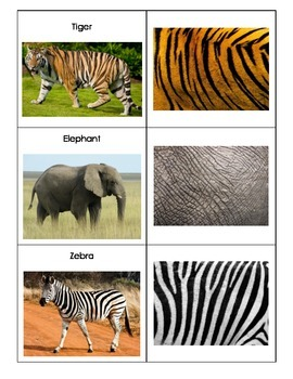 Animals and Their Skin Textures