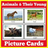 Animals and Their Young Offspring