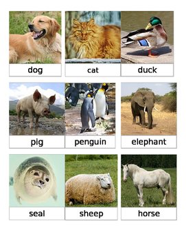 animals and their babies pdf