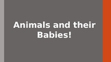 Animals and their Babies PowerPoint