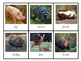 Montessori Animals and their footprint 3 part cards