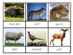 Animals and their footprint 3 part cards