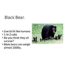 Animals and their offspring - powerpoint