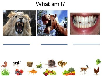 Animals and what they eat