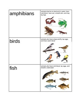 Animals- classify, sort, life cycles