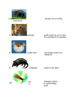 Animals for 4th Grade
