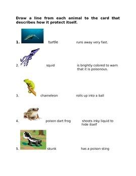 Animals for 4th Grade