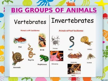 Animals for EFL students