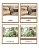 Animals from Australia
