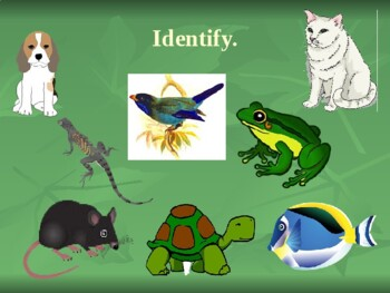 Animals in English power point