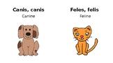Animals in Latin!