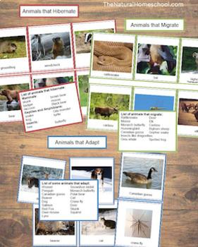 Animals in Winter Bundle #2 (Hibernation, Migration, Adaptation)