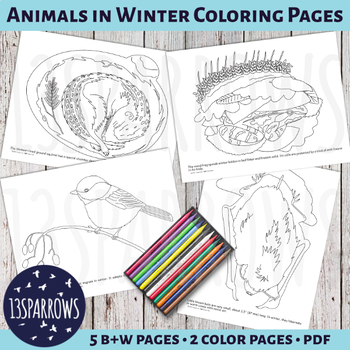 Hibernation Coloring Pages Teaching Resources